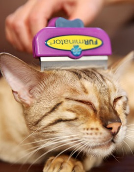 Which Cat Breeds are Recommended for a deShedding Tool?